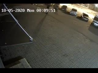Медведь напал на человека в Ярославле NR