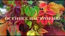Осенние этюды. Vol.1 Ph: Айрат Шарипов
