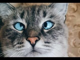 Я Кошка! И это всё, что вам нужно знать обо мне.
