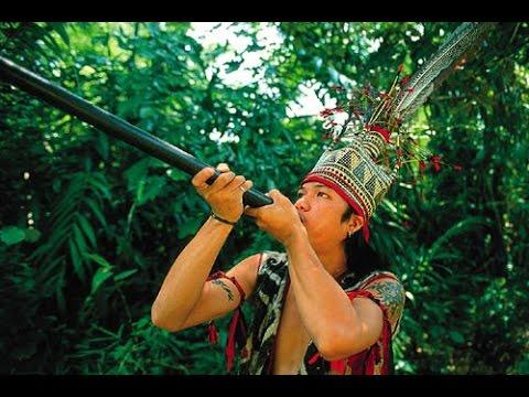 Духовое оружие индейцев Амазонки Dukhovoye weapons Indians of the Amazon