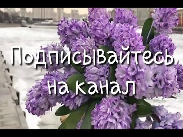 Ойланаш Йойту Ахь 💣❤👍 - Алиса Эльмурзаева 2019 ❤💣