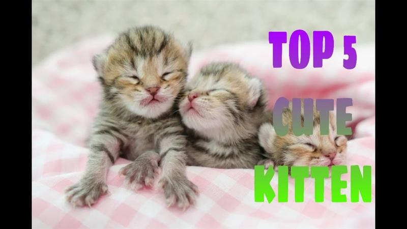 Cute little kitten compilation 2020 cute kitten part 8