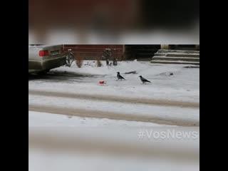 Акция «Покорми птиц» стартовала в Подмосковье с 25 января.