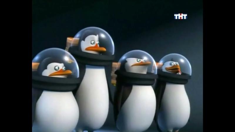 Пингвины из Мадагаскар анонс на ТНТ 2009