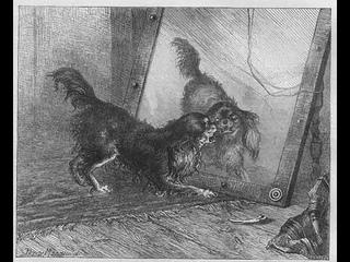 Китайская притча о зеркале и собаке