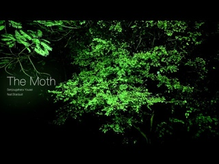 【Stardust】- The Moth 【Senjougahara Yousei】