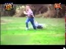 Смішні приколи про тварин Вусо-лапо-хвіст 16