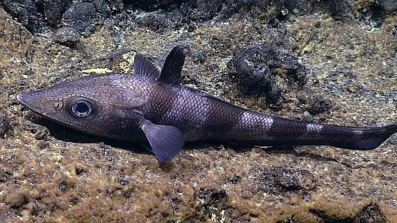 Papahānaumokuākea une réserve marine inestimable