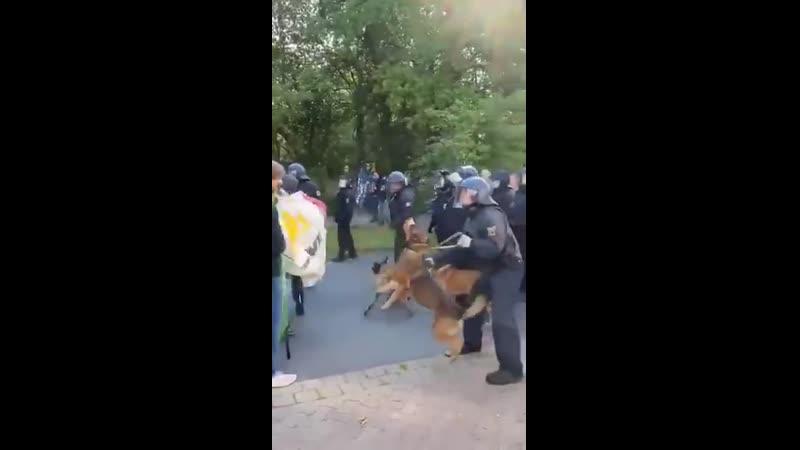Hunde und Pfefferspray Warum tun die Polizisten den Hunden sowas an