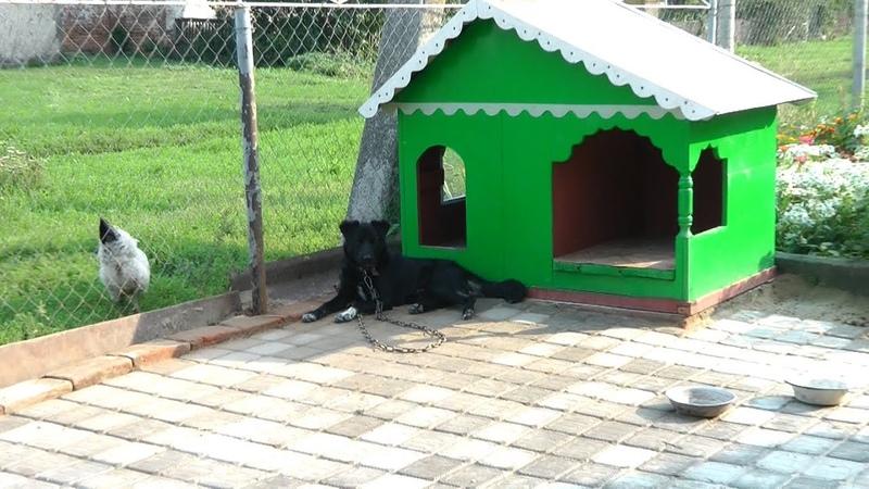 Коттедж для Собакина и будка для хозяина
