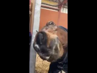 Желаю найти человека, который будет смотреть на тебя также, как эта лошадь