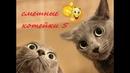 Funny video about cats 5 Смешное видео про кошек