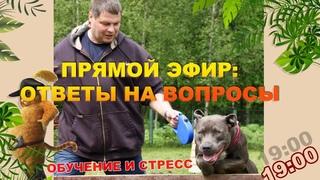 Иван Затевахин: обучение животных и стресс - задай свой вопрос в прямом эфире
