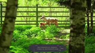 В Московском зоопарке родились два редких олененка