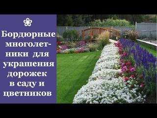 ❀ Самые красивые бордюрные многолетники для украшения дорожек в саду и цветников