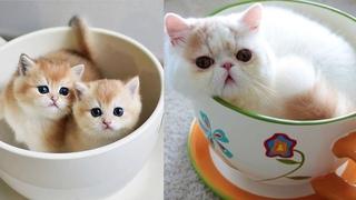 Очаровательные котята-манчкины ~ Видео о милых и забавных кошках и котятах