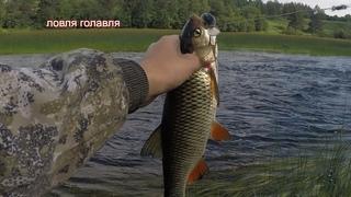 рыбалка на спиннинг ловля голавля