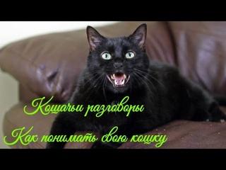 Кошачьи разговоры Как понимать свою кошку  Cat talk How to understand your cat