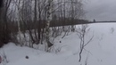 Охота с Русской гончей на зайца 17 02 20