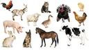 Учим Животных по Системе Монтессори - Развивающие Мультики для Детей