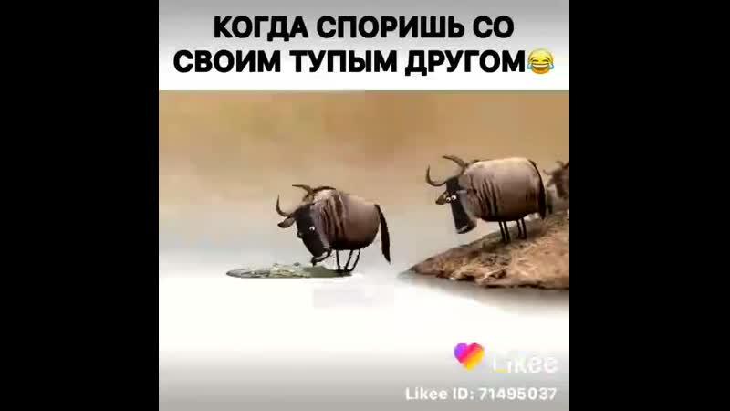 Madina_yusupova_777__20200211_2.mp4