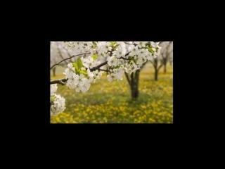 Песня из фильма quot 17 мгновений весны quot