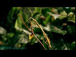 BBC Чудеса жизни Wonders of Life 2013 Серия 5 Паутина жизни
