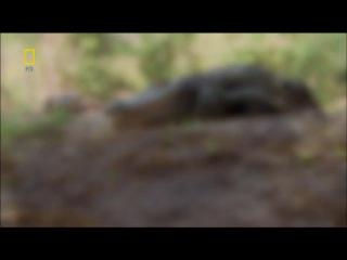Самые опасные животные мира 12 серия Северная Америка