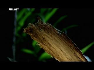 Войны жуков гигантов 2 5 серия Monster bug wars 2 2012