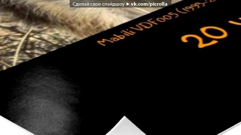 Со стены Поместье сурикатов * Meerkat Manor под музыку Gregorian Amelia Brightman Moment Of Peace live in Berlin Pi
