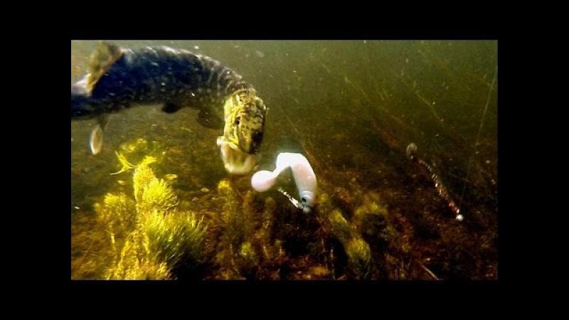 Bright softbait vs dark strikes attacks Fishing lures for pike perch bass zander muskie Щука атакует