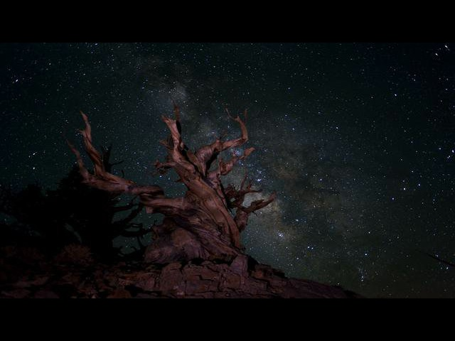 Bristlecone Pine and Milky Way White Mountains California