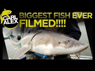 SALMON fishing and BIGGEST STURGEON EVER CAUGHT ON FILM - Carl and Alex Fishing - 2014