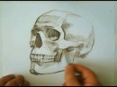 Speed drawing human skull - how to draw skulls