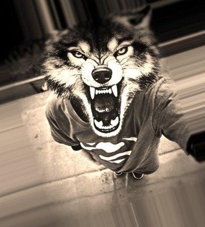 картинки людей с головой волка на аву мечтаете