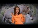 Лев, животное-мудак секс 40 раз в день, многоженство, драки, тунеядство Все как у зверей