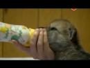 Сериал BBC Животный интеллект 1 Органы чувств