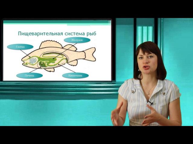 Надкласс Рыбы Подтип Позвоночные Тип Хордовые Онлайн подготовка к ЕГЭ по Биологии