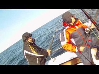 Палтус атакует зубатку.Halibut attacks catfish,Norway