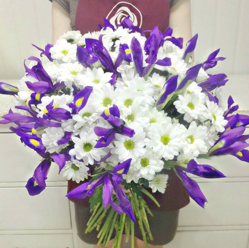 фото ирисов хризантемы связано