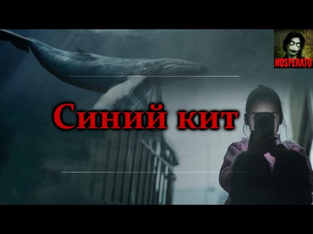 Истории на ночь Синий кит Смертельная переписка Вконтакте Жуткая смертельная игра