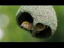Что строят животные Архитекторы мира дикой природы Фильм Discovery Science HD 18 01 2017