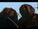 BBC Жизнь млекопитающих The Life of Mammals 2002 2003 09 Карьеристы