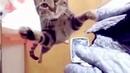 Смешные животные кошки и собаки и прочее Подборка приколов про животных