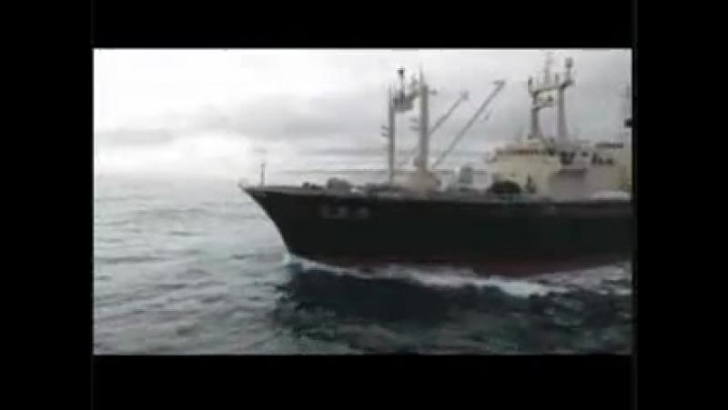 Whale Wars ~The Trailer китовые войны