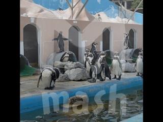 В заброшенном японском океанариуме оставили пингвинов и дельфина