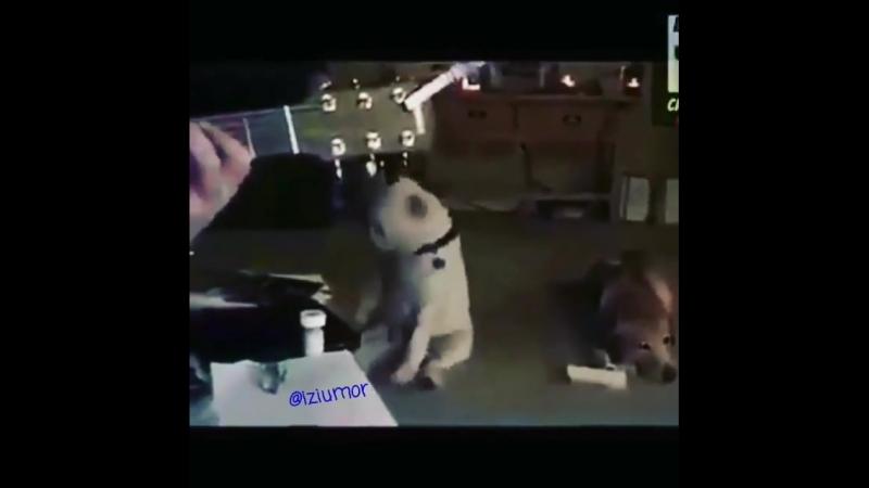 Joy dog2 смех смешноевидео юмор прикол приколы оченьсмешно слезы угар ржака 640 X 640 mp4
