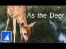As the Deer with lyrics best heartwarming version