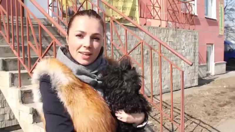 Стрижка собак_ дома или в салоне Говорит ЭКСПЕРТ
