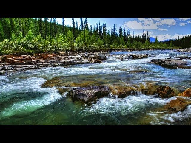 Река Миссисипи чудеса дикой природы Документальный фильм